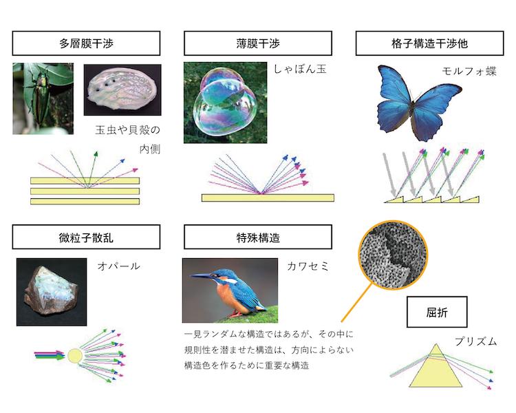 図9-1 構成色の仕組みと自然界の構造色例
